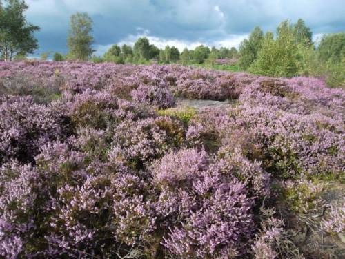August 2015 - Farnhill Moor in all its glory